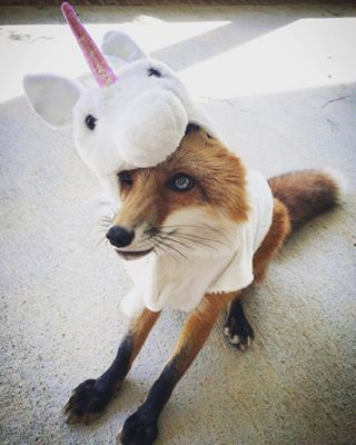 She will fill you with wonder and admiration. | Community Post: 19 Reasons You Need To Follow Juniper The Fox On Instagram