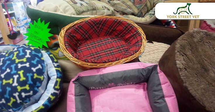 Spoil your best friend with our must-go dog beds clearance sale at #YorkStreetVetShop , selected stock only. T&C's Apply, while stocks last. #DogBeds #ilovemydog