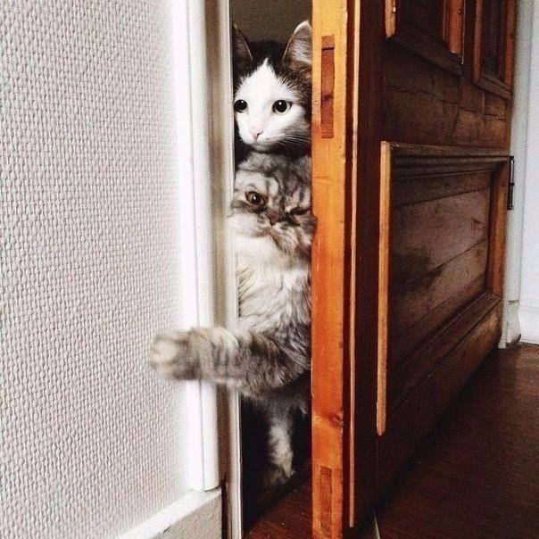 Потому что коты обязаны всегда быть в курсе того, что ты делаешь