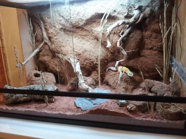 Leopard Gecko Foam Background Terrarium Inspiration