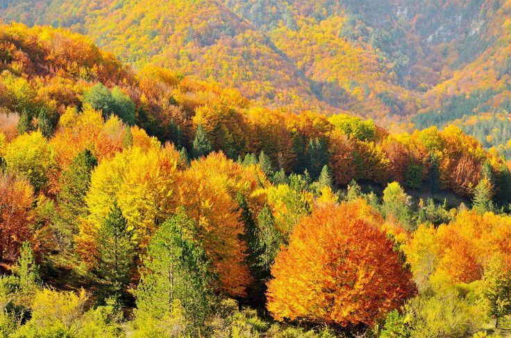 Autunno nel Parco Nazionale d'Abruzzo, Autumn in the Abruzzo National Park