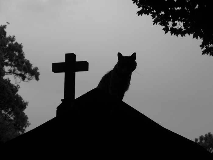 The relationship of cats and death has been reported though history. Cats could forecast death. When a person lay dying at home the cat refused to stay...
