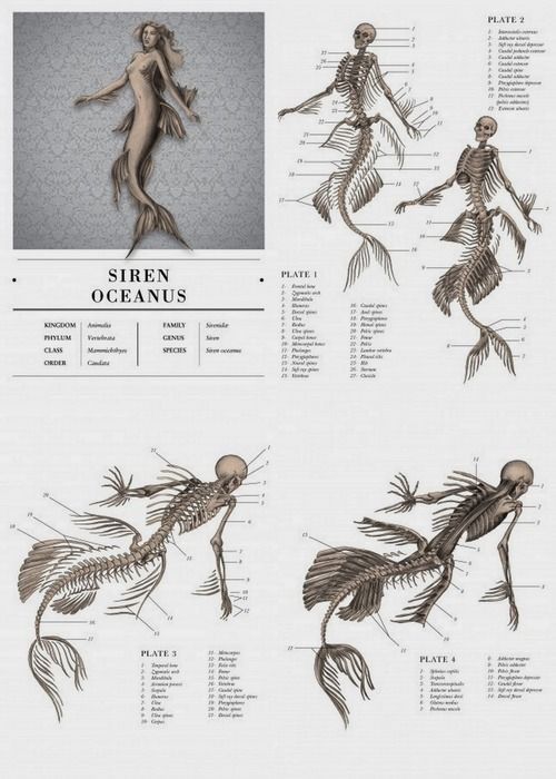 drawing art female draw underwater fish Anatomy creature tail mermaid Mermaids male reference tutorial mythology Aquatic fin fins mythical scales merman references mermen