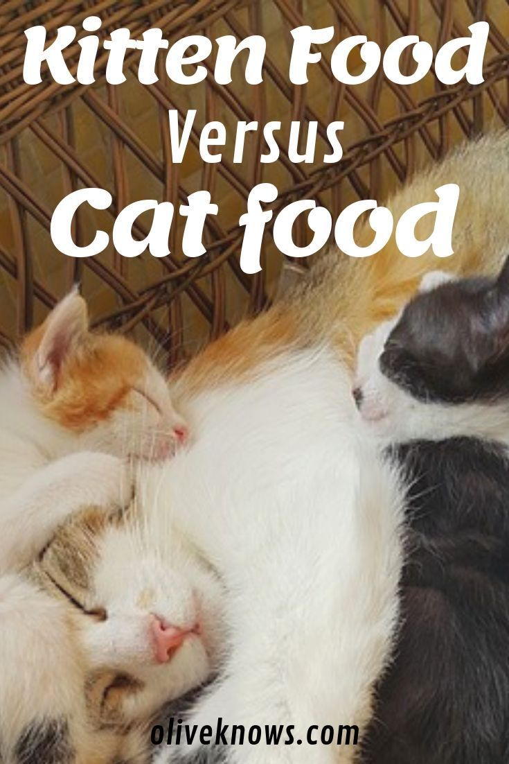 Kitten Food Vs Cat Food Do You Know The Differences Oliveknows Kitten Food Cat Safety Kitten