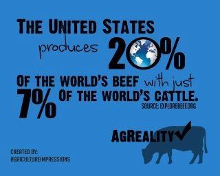 world's cattle infographic