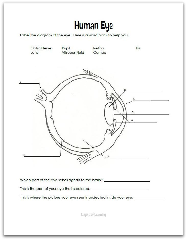 eye diagram worksheet eye free engine image for user manual download. Black Bedroom Furniture Sets. Home Design Ideas