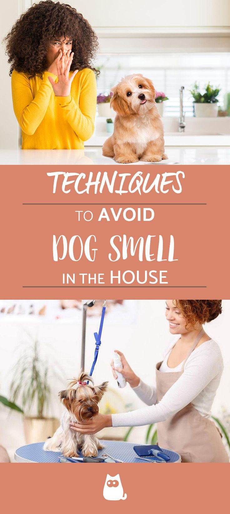 How To Get Rid Of Cat Urine Smell From Apartment Bing Images Stinky Dog Dog Smells Smelly Dog