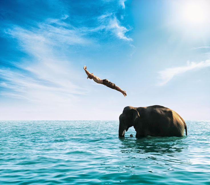 swimming with elephants in Thailand pleassseee