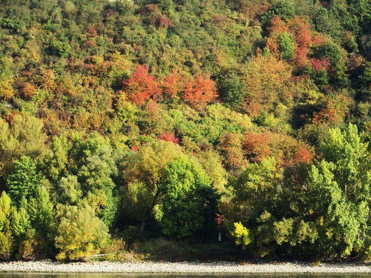 Bunter Herbstlaub verzaubert das gegenüberliegende Rheinufer in eine rauschende Farbpallette
