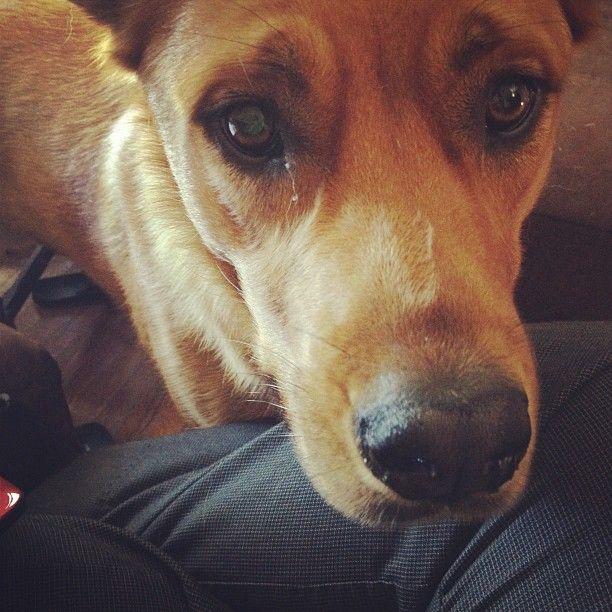 The most beautiful boy in the world! my little Gingerbread Man, Yogi.