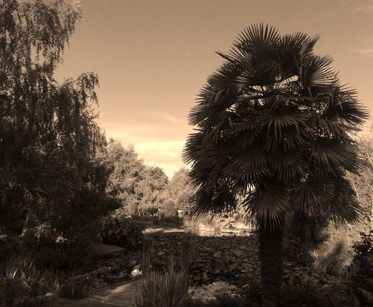 Garden by Lionessrules.deviantart.com on @DeviantArt