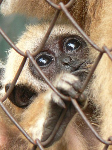 Are zoos cruel? Caged animals living in a zoo. Flickr user