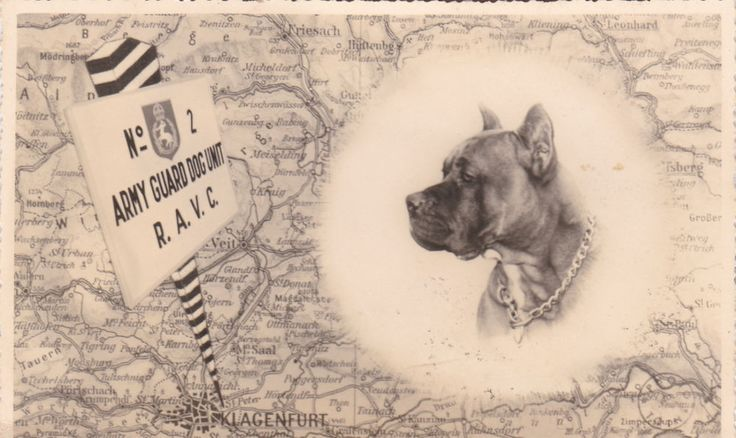 Ravc Collar Dogs