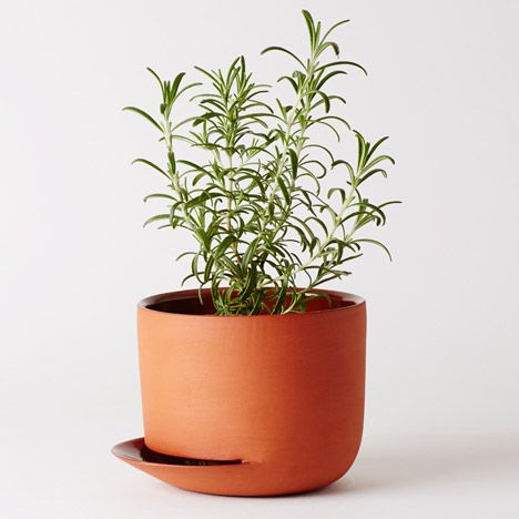 Oslo design studio Anderssen & Voll has designed a watering can with a long, precise spout and plant pots especially for cacti and herbs, as part of a collection of tools for indoor gardening