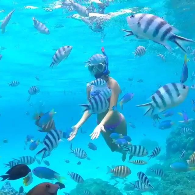 """How many of you would love to do this? 🐟🐠🐡 Video by @karina.sell #tbt #throwbackthursdays #luxwt #luxuryworldtraveler ━━━━━━━━━━━ Every Thursday we take a look back at some of the amazing places we have featured in the past. For travel requests or for more information please visit email travel@luxwt.com ━━━━━━━━━━━━ """"Dream Big, Eat Well & Travel On!"""" ━━━━━━━━━━━"""