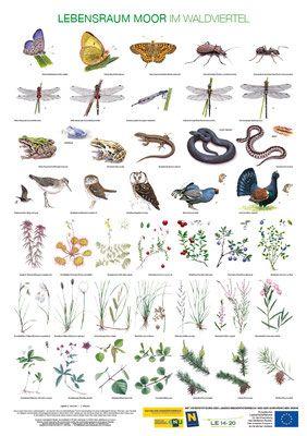 Bird posters, garden birds, woodland birds, farmla…