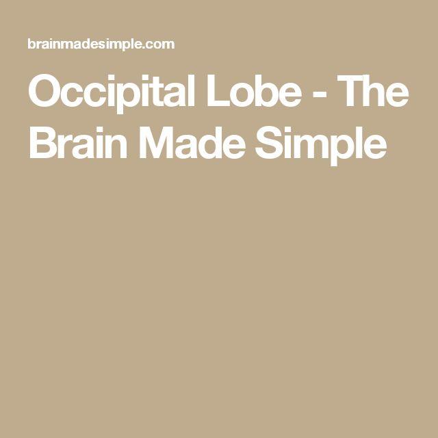 Occipital Lobe - The Brain Made Simple