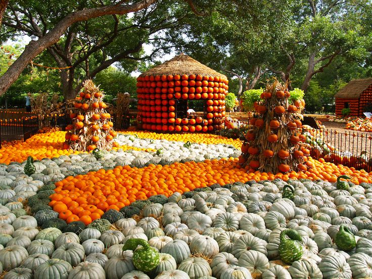 Image result for dallas arboretum fall pumpkins