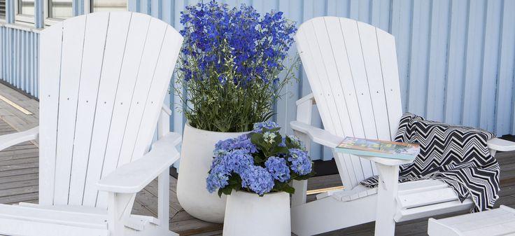 Ønsker du å skape en sydlandsk stemning hjemme hos deg selv? Vi har blomstene og tilbehøret som gjør det enkelt for deg å gjenskape Middelhavsfølelsen på din terrasse.