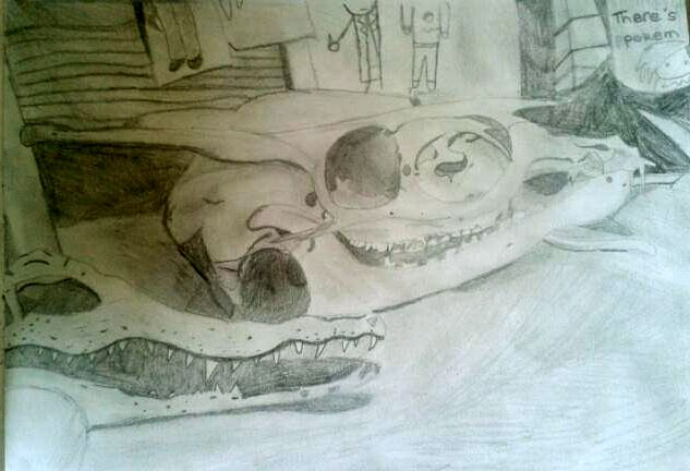 June 2014  Drew a Muntjac and a baby crocodile skull :P
