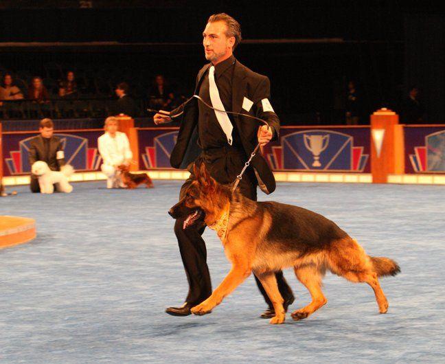 Köpek Eğitimi http://www.almankurdu.com/kopek-egitimi