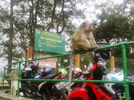 VISUAL ETHNOGRAPHY: Macaca Fascicularis: Between Attraction and Privat...