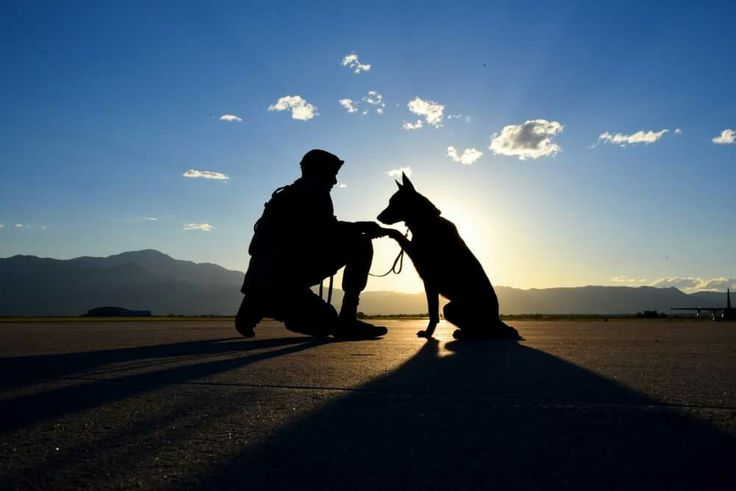 Senior Airman Tariq Russell, 21st Security Forces Squadron military working dog handler, shakes hands with his partner, Ppaul, at Peterson Air Force Base, Colo., (U.S. Air Force photo by Airman 1st Class Dennis Hoffman)