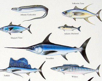 Cintilla Atlántico, atún de aleta amarilla, pez espada pez de Vintage 1984 libro placa