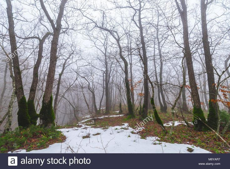 Spring Nature Landscape With Melting Snow And Thawed Patches In Foreststock Photo Spring Nature Landscape Photography Nature Vintage Nature Photography
