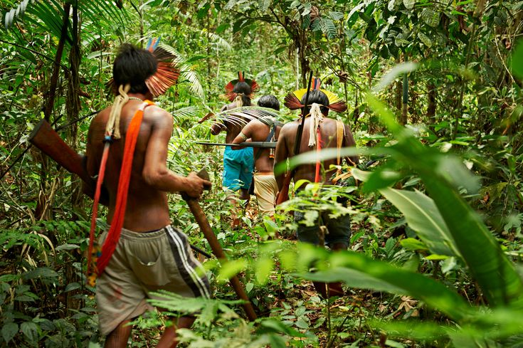 Rain Forest Warriors: How Indigenous Tribes Protect the Amazon §§§ With outside help, tribes like the Kayapo defend their land against ranchers, loggers, and miners. By Barbara Zimmerman, for National Geographic   §§§ How did a huge island of green in the Amazon become a fortress against ranchers, loggers, and miners? Answer: indigenous tribes.