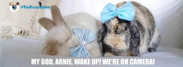 Follow The Fluffy Group on Instagram, Facebook and Pinterest. Memes, bunny care tips and tricks, and simply adorable photos of the bonded neutered cage-free duo. <3