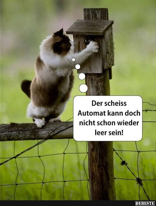 Besten Bilder, Videos und Sprüche und es kommen täglich neue lustige Facebook Bilder auf DEBESTE.DE. Hier werden täglich Witze und Sprüche gepostet! – Melanie Stolle