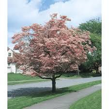 10 Best Trees For Small Yards | Making DIY Fun