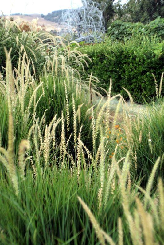 John Greenlee's Mediterranean Meadow in Cornerstone, Sonoma, CA.