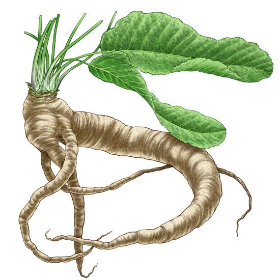 All About Growing Horseradish - Organic Gardening - MOTHER EARTH NEWS