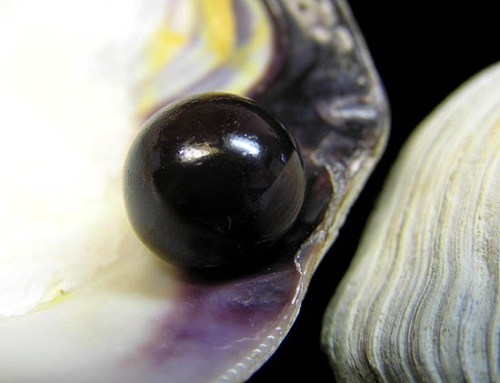 56 Best Quahog Pearls Images On Pinterest Pearls Shell