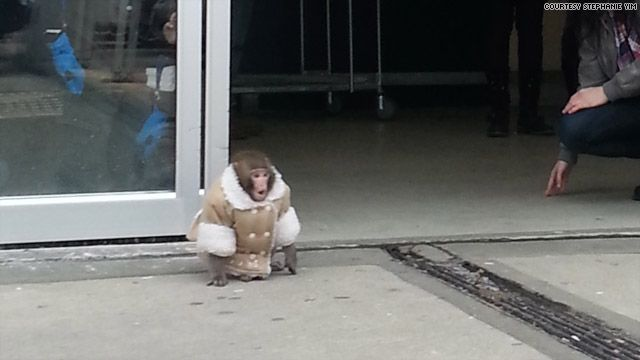 The Ikea monkey in his Shearling coat. I now need a monkey to put ...