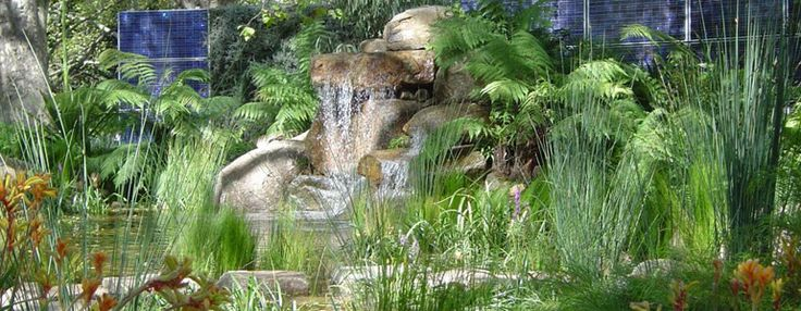 Oz Watergardens - for designing and creating large ponds