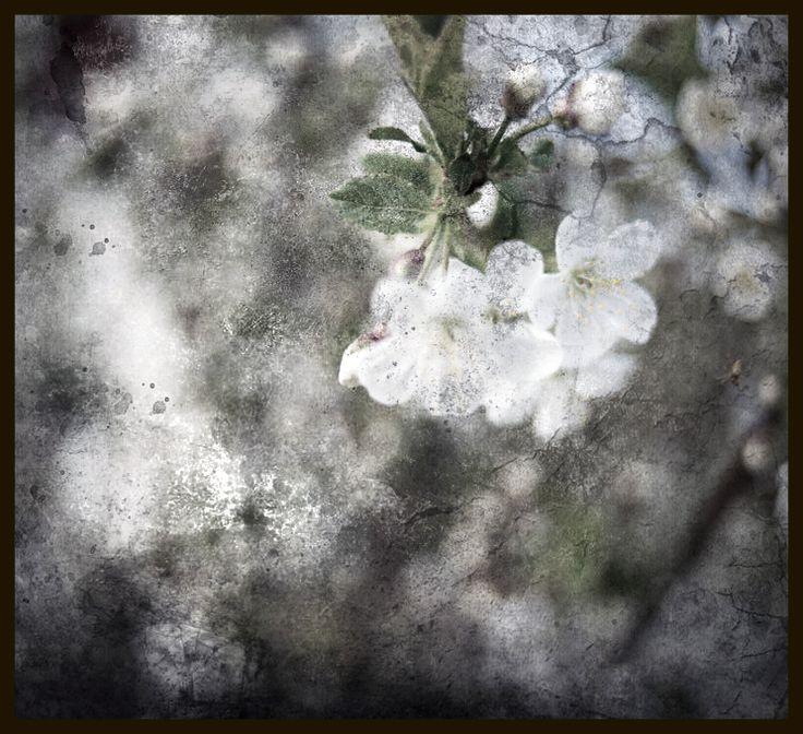 wiosna'