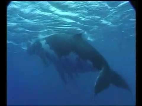 De walvis - YouTube