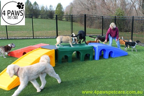 15 best texas elite landscaping images on pinterest for Best doggy day care