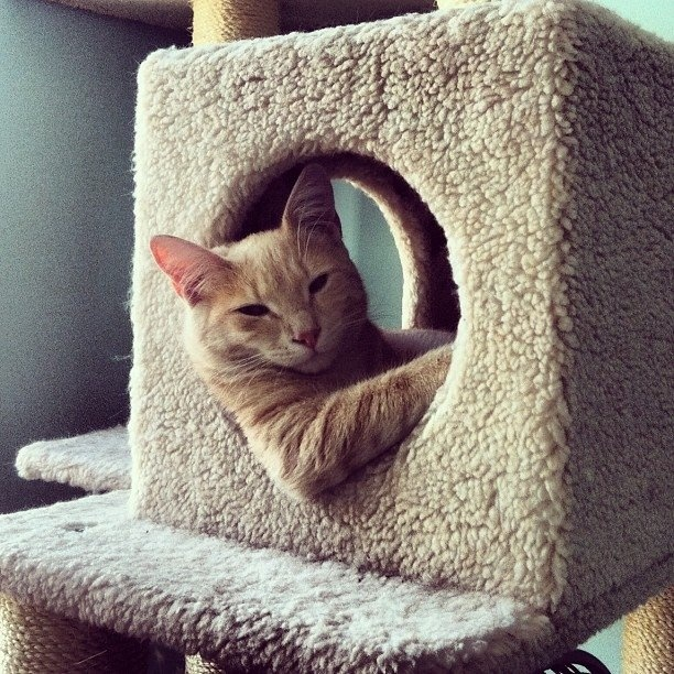 Do You Have an Awesome Pet? - Lifestyle - GOODAwesome Pets