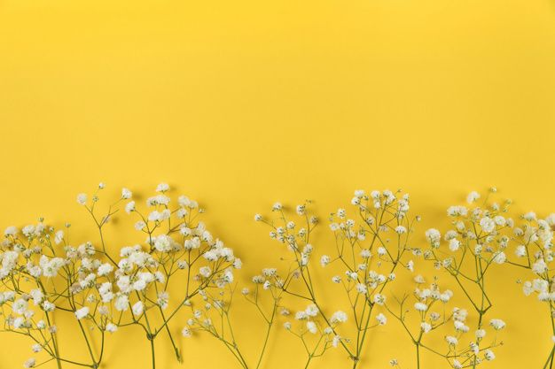Download White Baby Breath S Flower On Yellow Background For Free Yellow Background Aesthetic Desktop Wallpaper Yellow Wallpaper