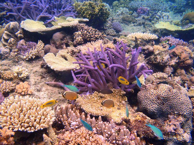 Fiji Marine Environment