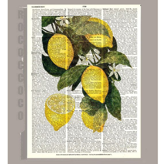 Beautiful Lemon Illustration Print on Vintage by RococcoCo on Etsy