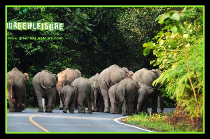Beautiful View from Anappara-Chundale-Wayanad   http://greenleisuretours.com/Wayanad-Honeymoon-Packages.php  Reach us GreenLeisure Tours & Holidays for any #Kerala #Tour #Packages   www.greenleisuretours.com  Like us & Reach us https://www.facebook.com/GreenLeisureTours for more updates on #Kerala #Tourism #Leisure #Destinations #SiteSeeing #Travel #Honeymoon #Packages #Weekend #Adventure #Hideout — at Wayanad Kerala.