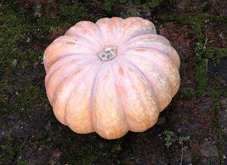 Sophie Dahl's Pumpkin Soup