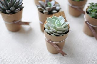 Cute little succulents for wedding favours