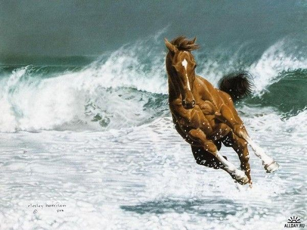 Lesley Harrison art: Beautiful Horses, Animals, Art, Beauty, Beach, Photo