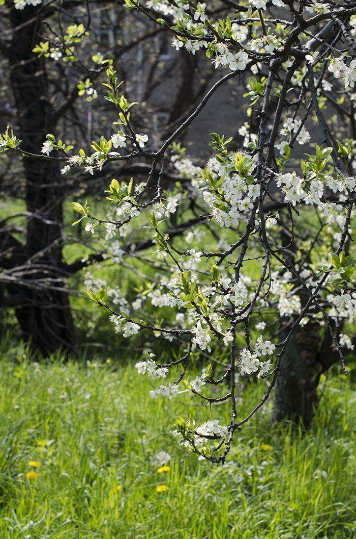 a secret garden in trieste